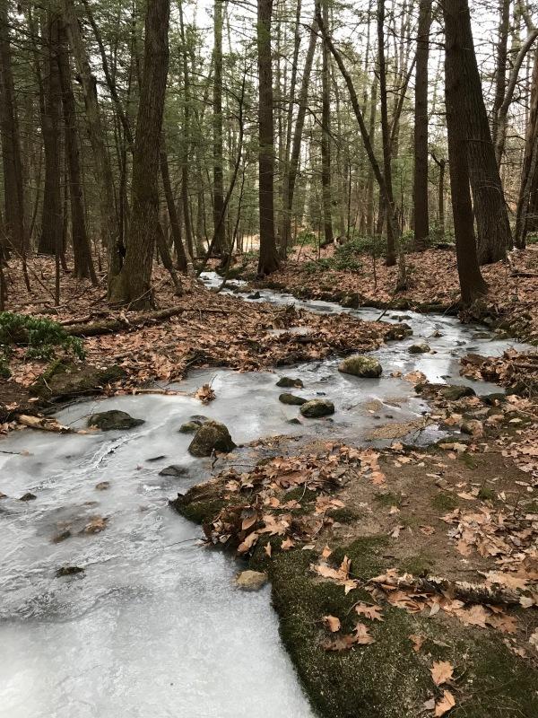 frozen stream in the woods
